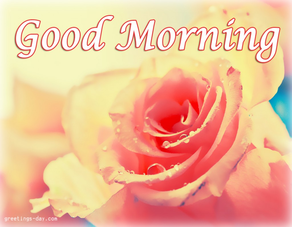 Good Morning Quotes With Roses : Good morning wishes with flowers pictures images page