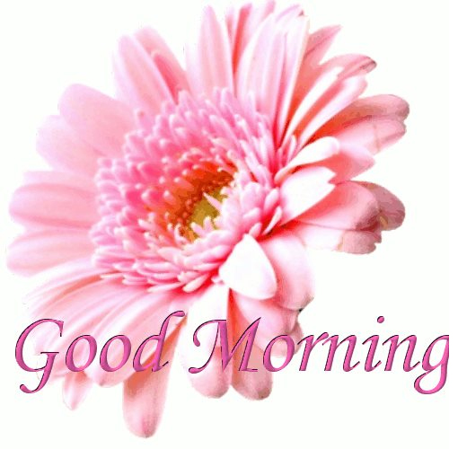 Good Morning With Pink Flowers-wg017114