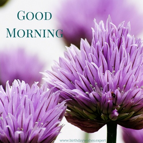 Good Morning With Purple Flowers
