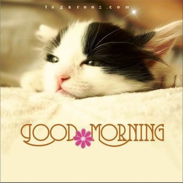 Good Morning With Sweet Cat-wg01349