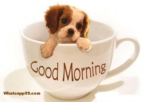 Good Morning With Sweet Little Puppy-wg001
