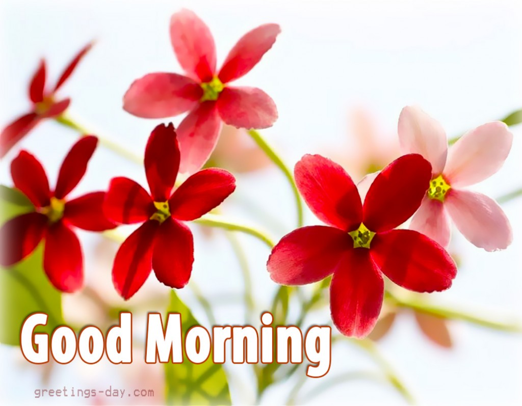 Good Morning Flowers Images : Good morning with sweet red flowers
