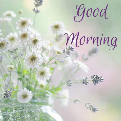 Good morning wishes with flowers pictures images page 67 good morning with white flowers gk56 mightylinksfo
