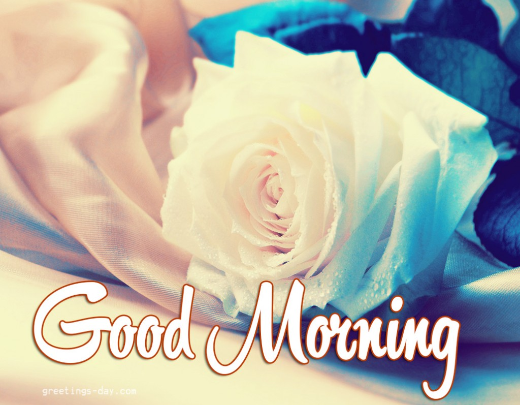 Good morning wishes with flowers pictures images page 57 good morning with white rose wg01058 mightylinksfo