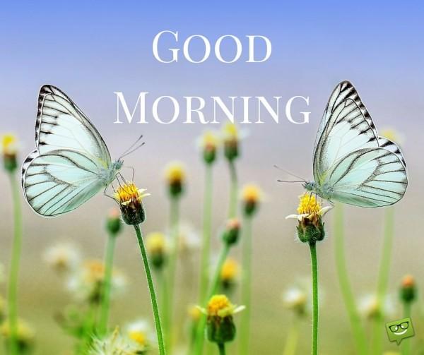 Good Morning !-wg01628