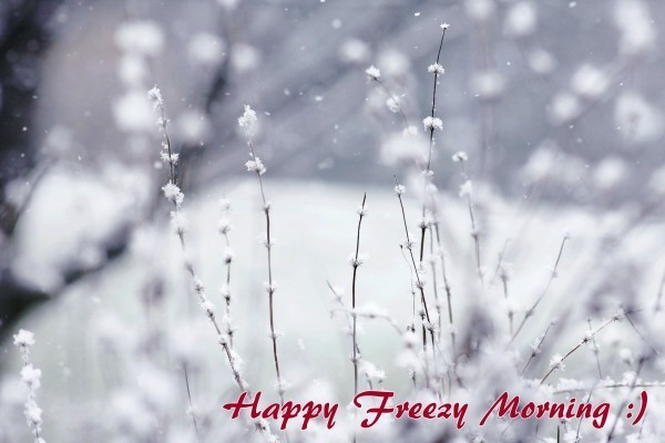 Happy Freezy Morning !-wg015050