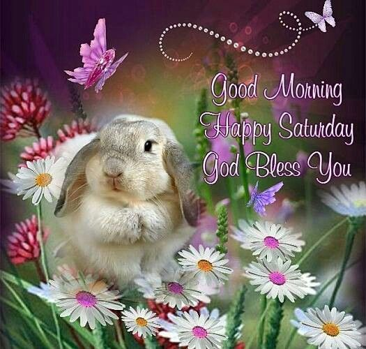 Good Morning Wishes On Saturday Pictures Images Page 8