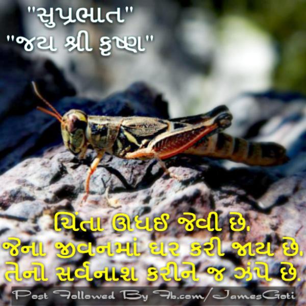 Happy Suprabhlat Jai Shri Krishan-wm1004