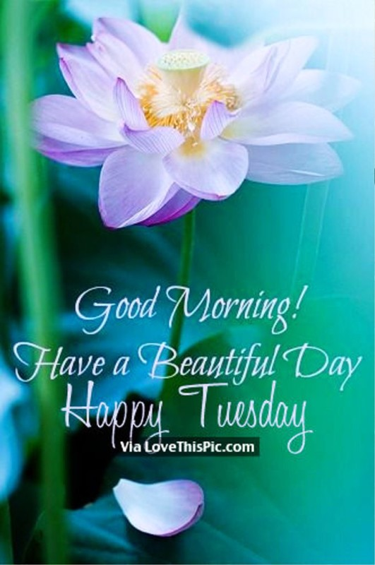 Happy Tuesday Good Morning !-wg01355