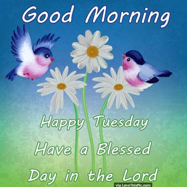 Happy Tuesday Have A Blessed Day In The Lord !-wg01643