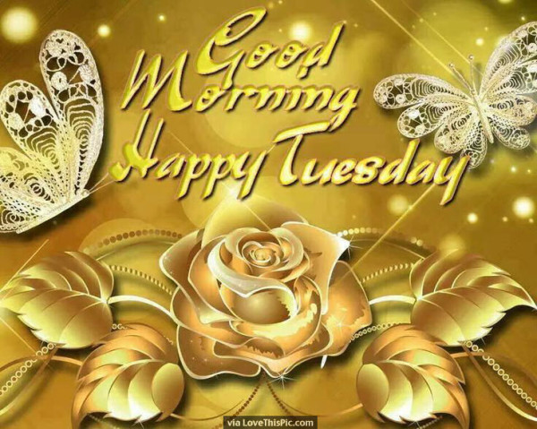 Happy Tuesday Morning-wg01644