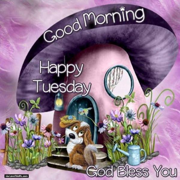 Happy Tuesday !-wg01642