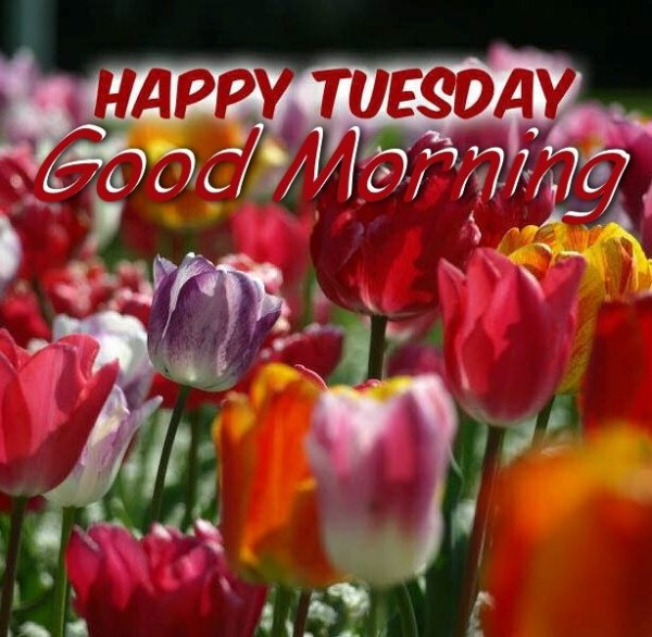 Happy Tuesday - Good Morning !-wg015055