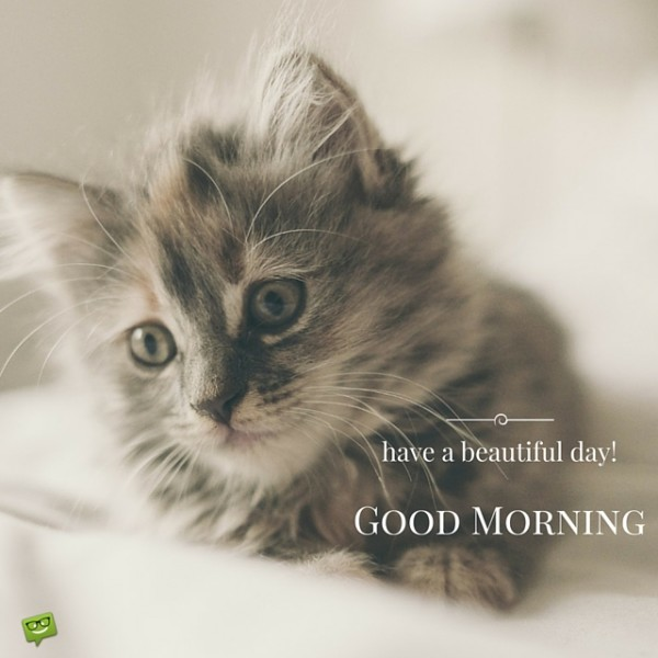 Good Morning Quotes Cat : Have a beautiful day good morning with cat