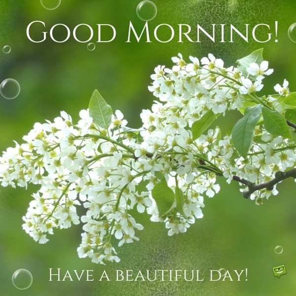 Have A Beautiful Day - Good Morning-wg01762