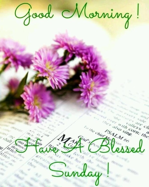 Have A Blessed Sunday-wg0725