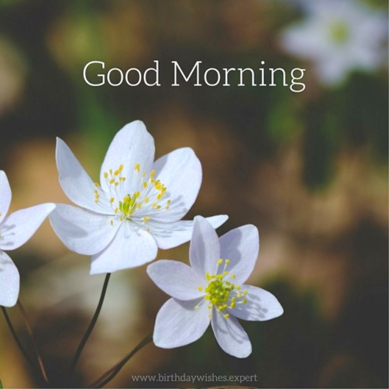 Natural Images With Good Morning