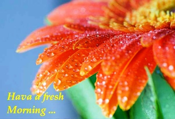 Have A Fresh Morning-wg01358