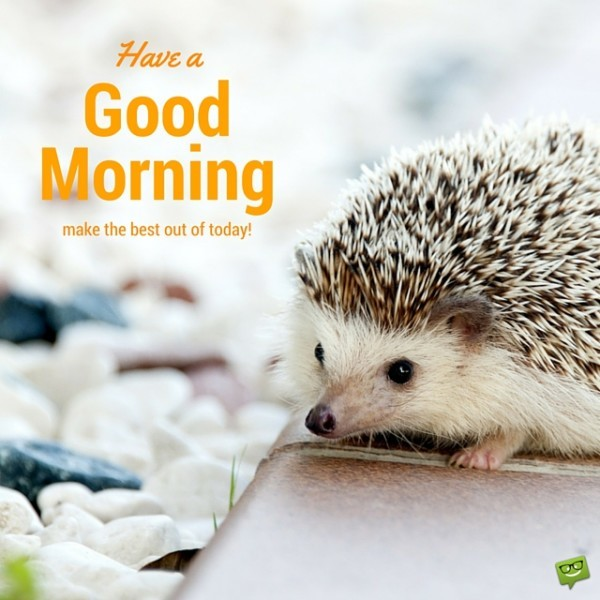 Have A Good Morning Make The Best Of Today !-wg017135