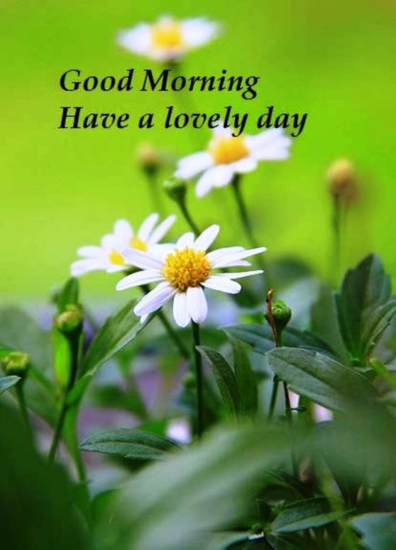Have A Lovely Day Good Morning