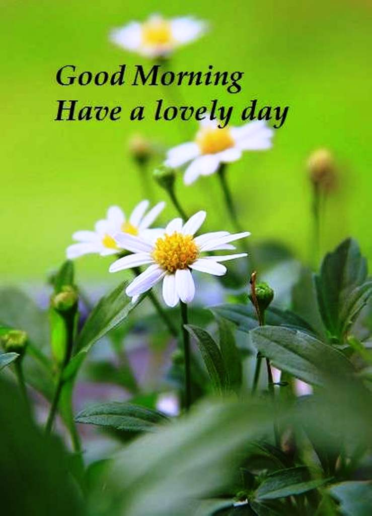 Good morning wishes with flowers pictures images page 46 Flowers that make you happy
