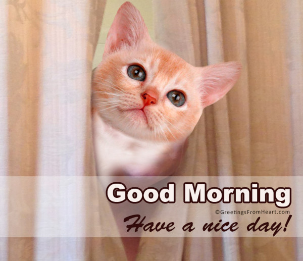 Have A Nice Day - Good Morning-wg0197