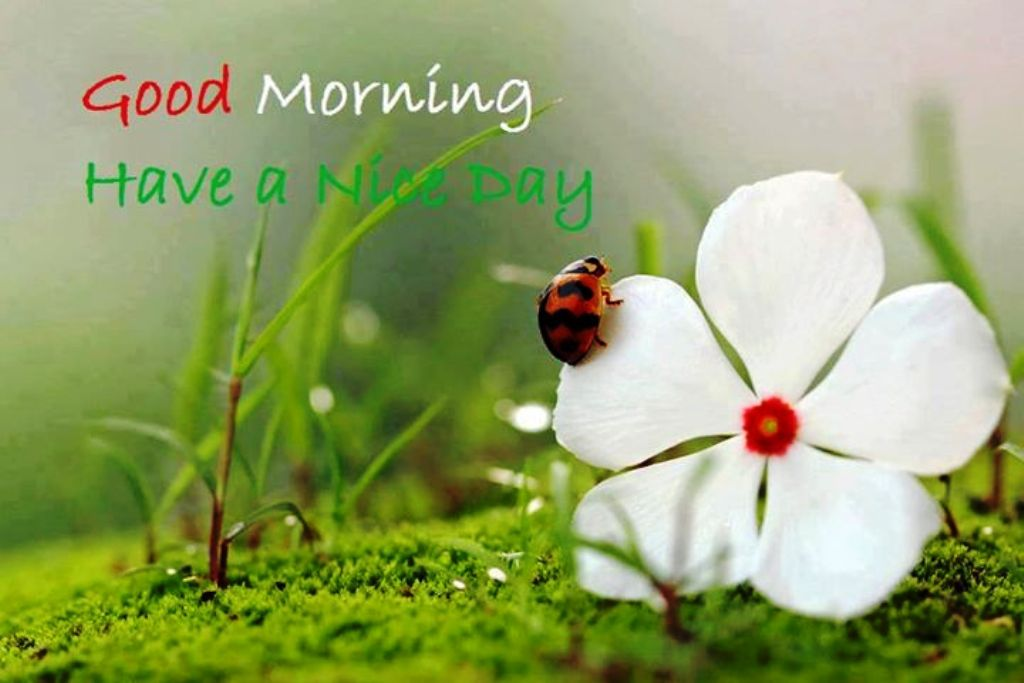 Good Morning Wishes Pictures Images Page 55