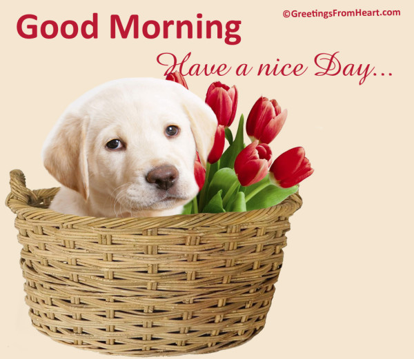 Have A Nice Day -wg0221