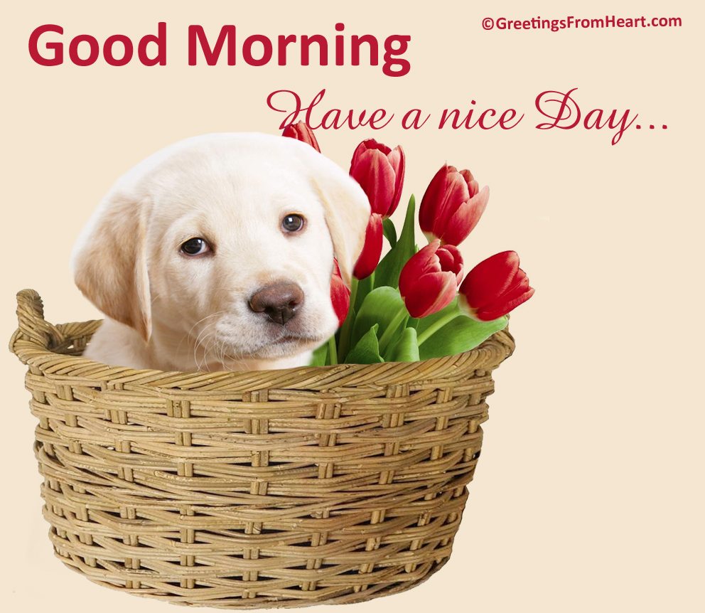 Good Morning Wishes With Dogs Pictures Images Page 4