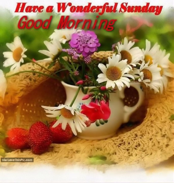 have a wonderful sunday � good morning