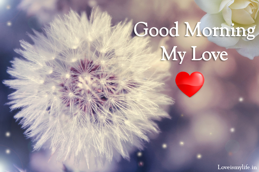 Good Morning My Love: Have Amazing Good Morning My Love