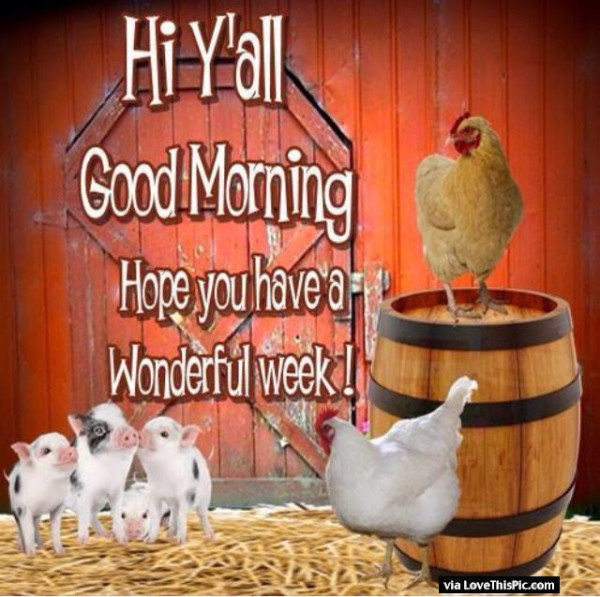 Hi Good Morning !-wg01663