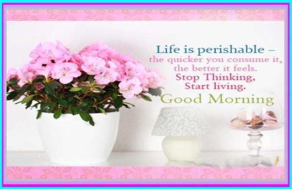 Life Is Perishable - Good Morning-wg017156