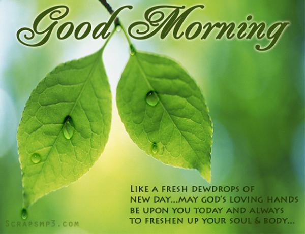 Like A Fresh Dewdrops Good Morning-wg01779