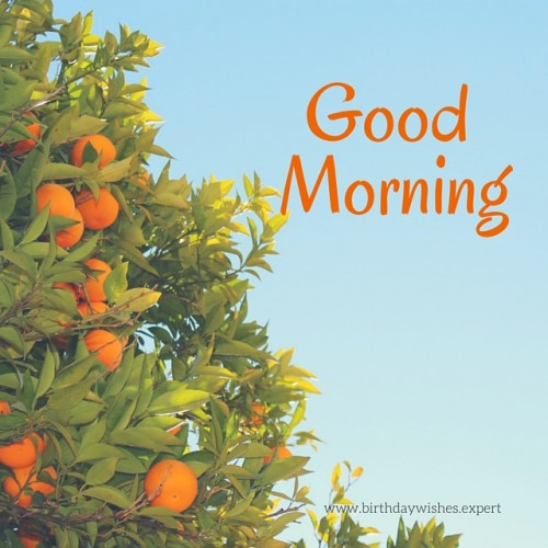 Lovely Morning !-wg015086