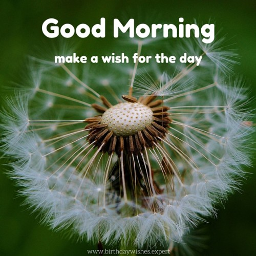 Make A Wish For A Day Good Morning-wg01780