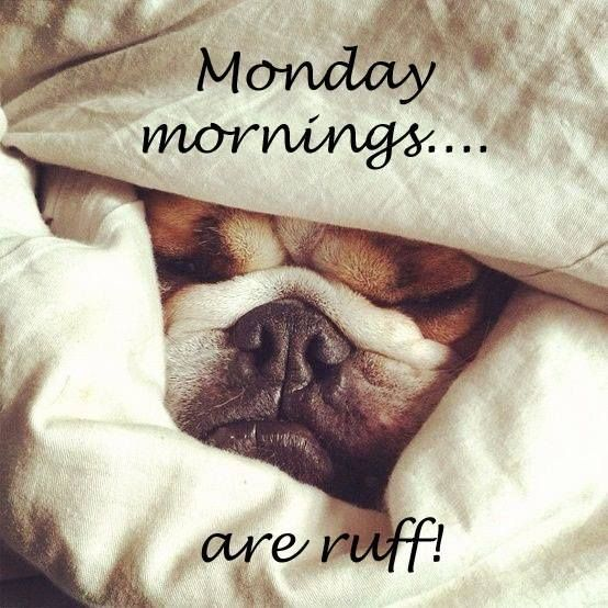 Monday Mornings Are Ruff !-wg015094