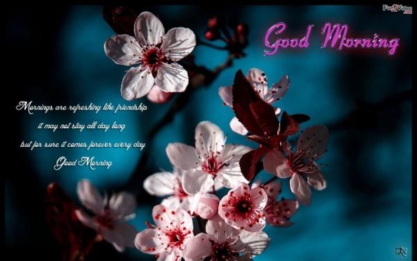 Morning Are Refreshing-wg01013