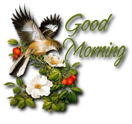 Morning - Bird-wg03420