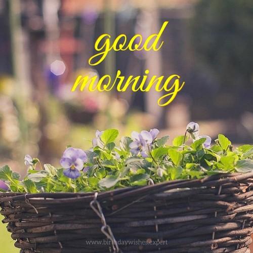 Morning - Flowers-wg03421