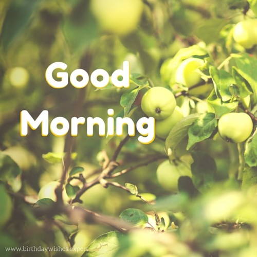 Good Morning Quotes With Fruits: Good Morning Wishes With Fruits Pictures, Images