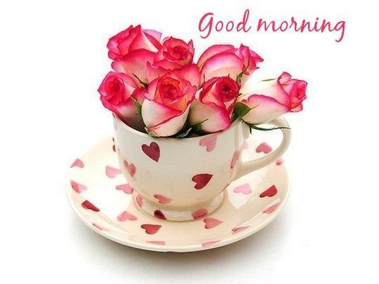 Morning - Roses-wg03423