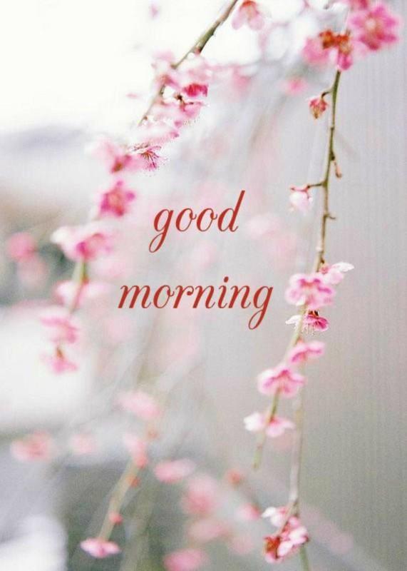 Morning Wish-wg01383