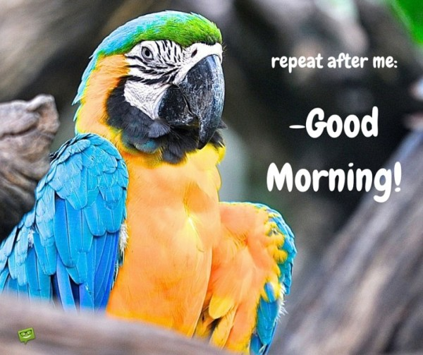 Repeat After Me - Good Morning-wg017181