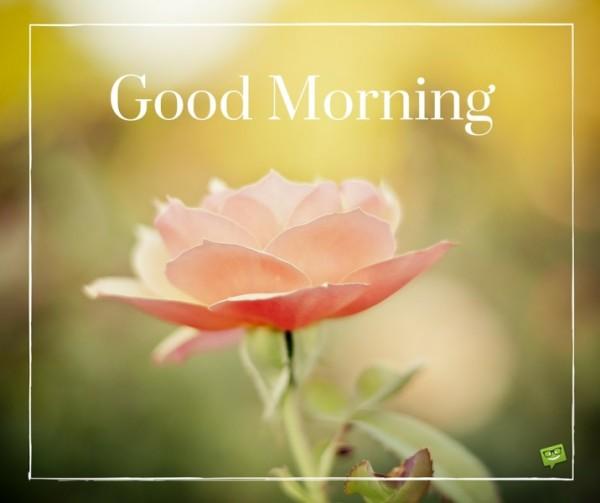 Rose For U - Good Morning-wg015104