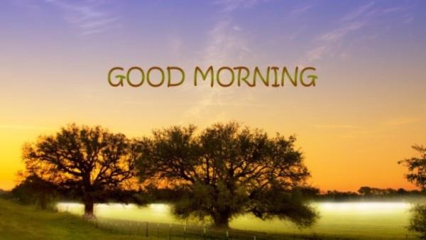 Sunny Morning-wg015110