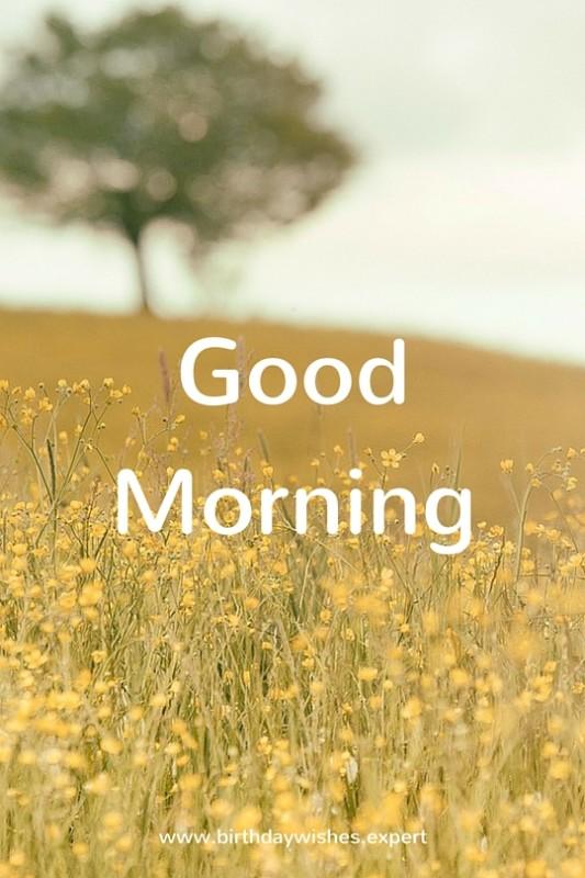 Sweet Morning Photo-wg03435