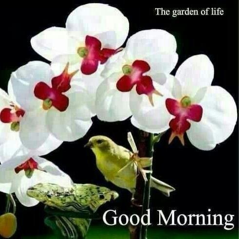The Garden Of Life Good Morning