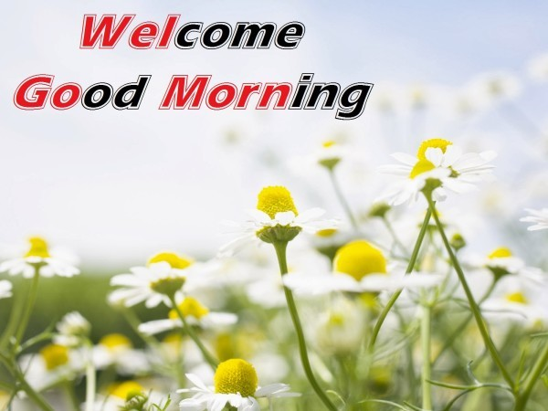 Welcome Morning-wg03437