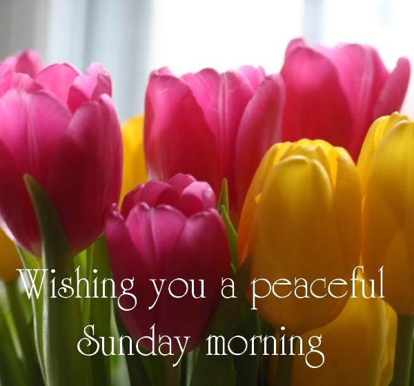 Wishing You A Peaceful Sunday Morning-wg0741